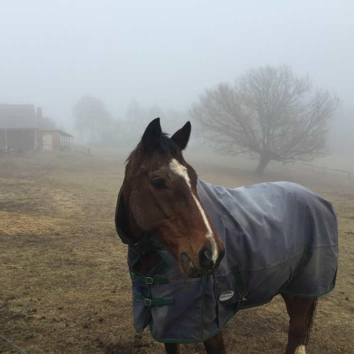 Horse photographed in fog.