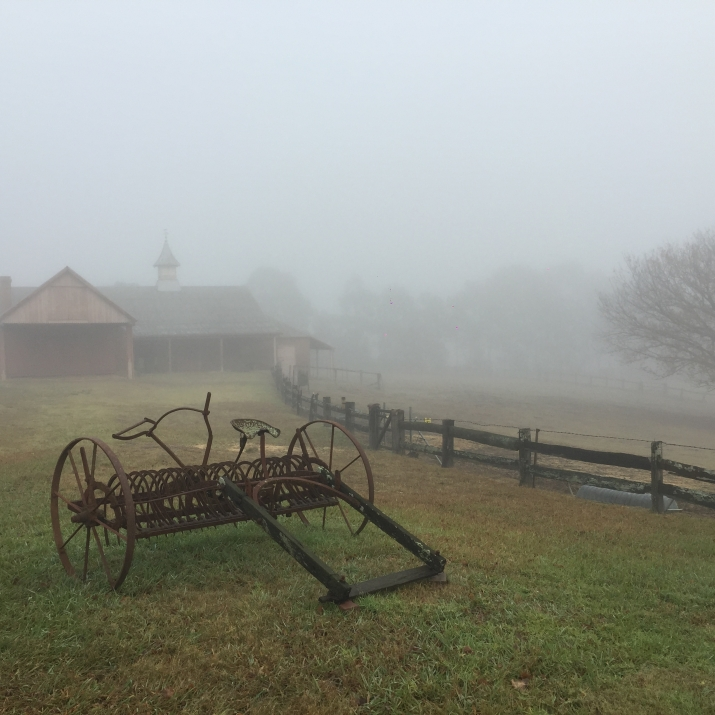Outdoor scenes photographed in fog.