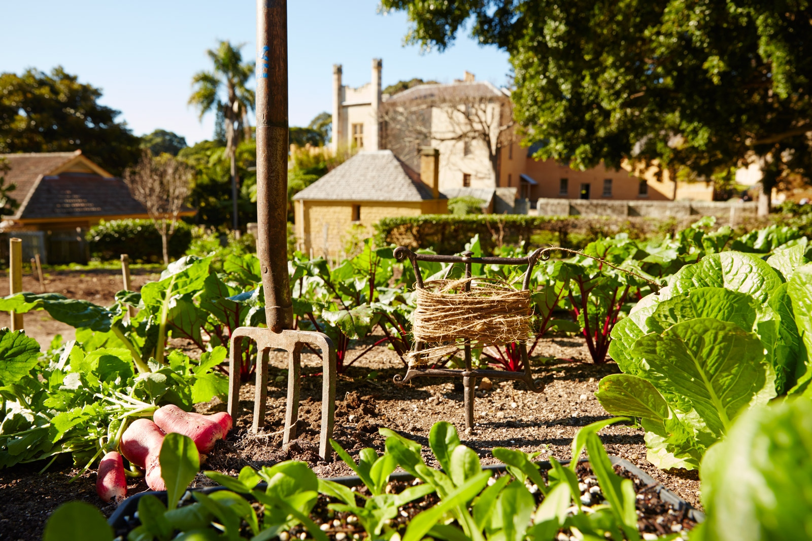 Gardening fork in the ground within the kitchen garden at Vaucluse House