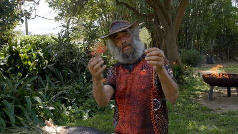 Uncle Fred - Plants and bush foods