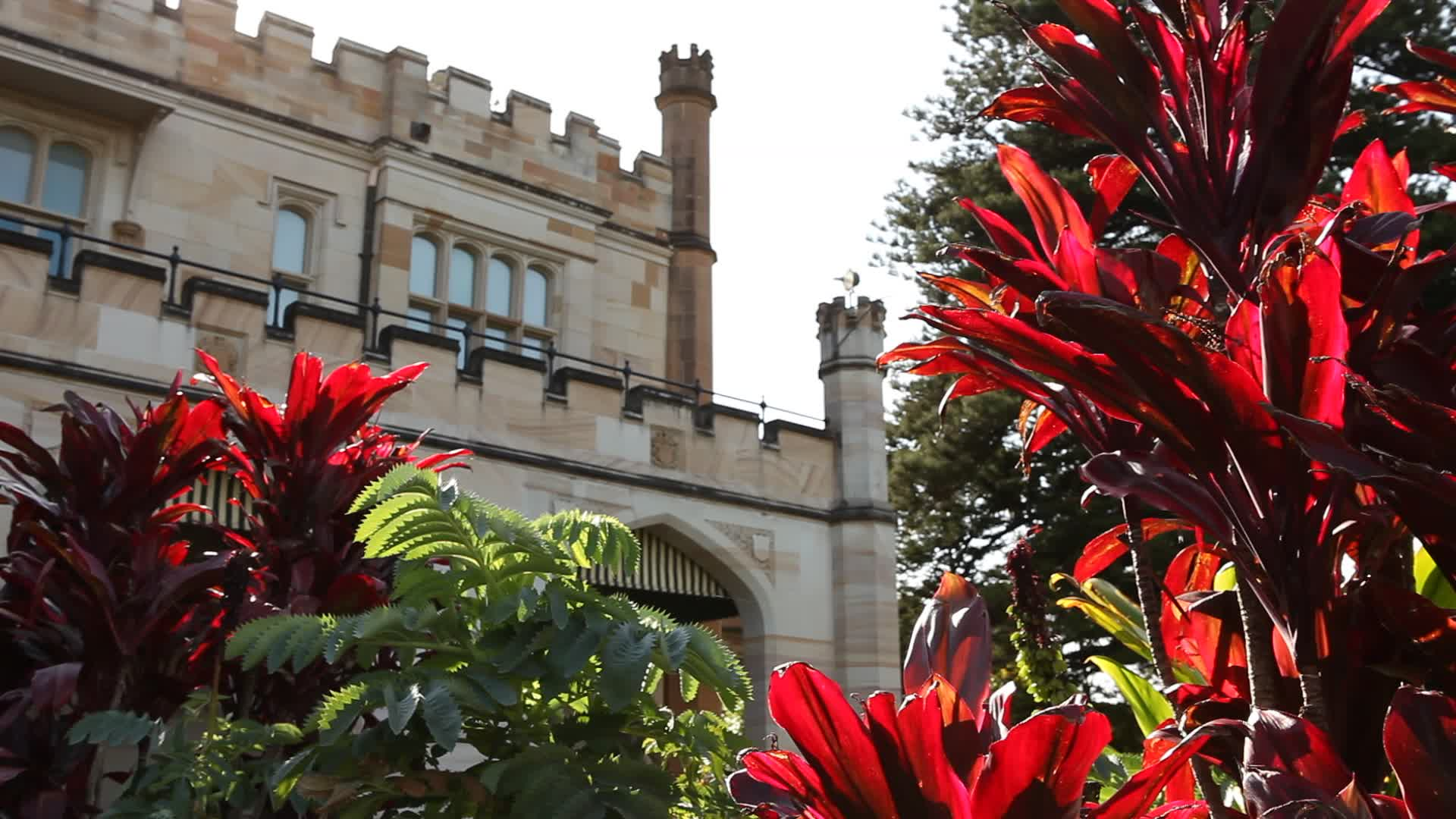 View of Government House through foliage and red flowers.